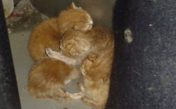 These gorgeous kittens had a lucky escape this week
