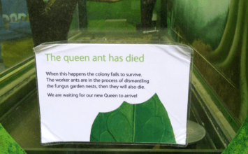 "Museum-goers left upset after melancholy ""Queen has died"" posters put up"