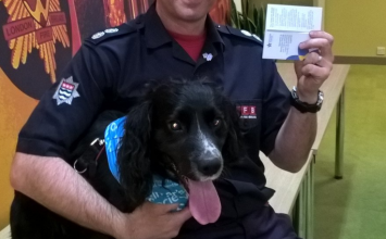 Firefighting Cocker Spaniel Sherlock named a Dementia Friend